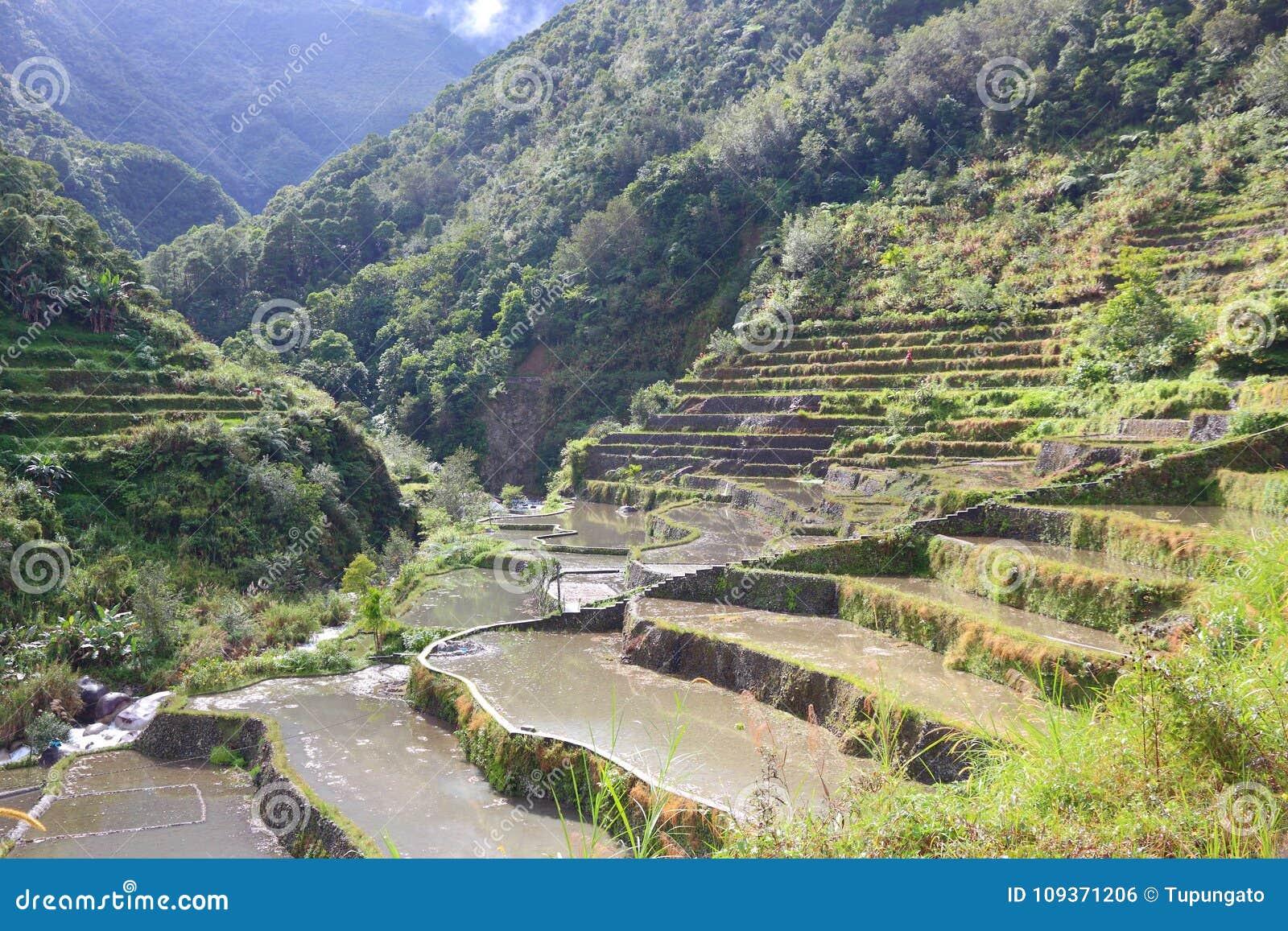 Philippinen-Reispaddys