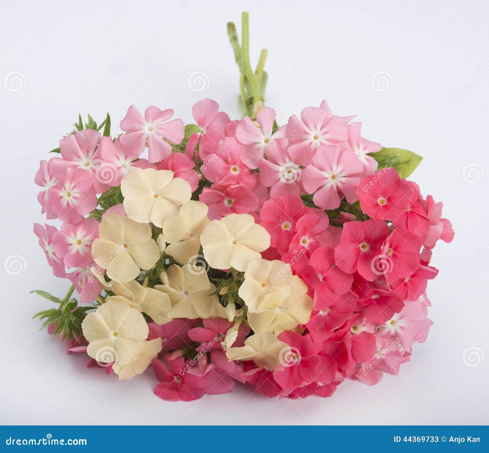 Phlox bouquet stock image. Image of beautiful, bouquet ...