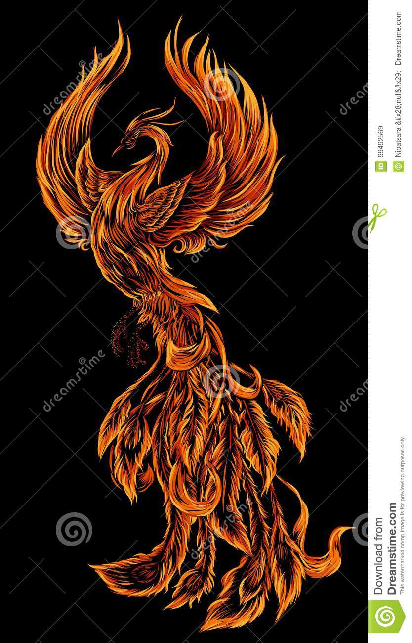 Phoenix Fire Bird Illustration And Character Design Hand Drawn