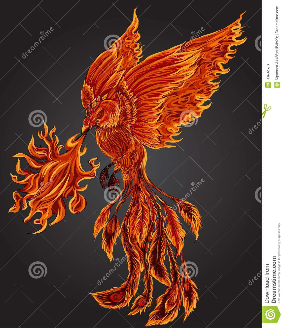 Phoenix Fire Bird Illustration And Character Designhand Drawn