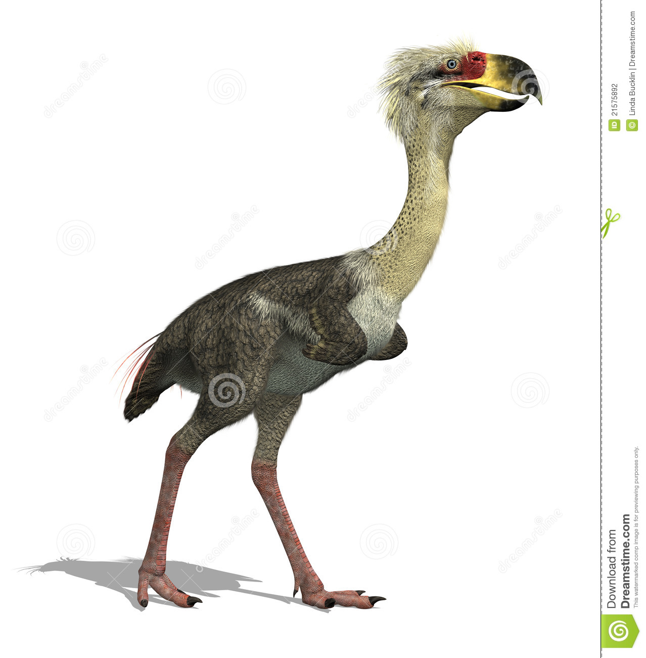 This large, flightless carnivorous bird lived 27 million – 15,000 ...