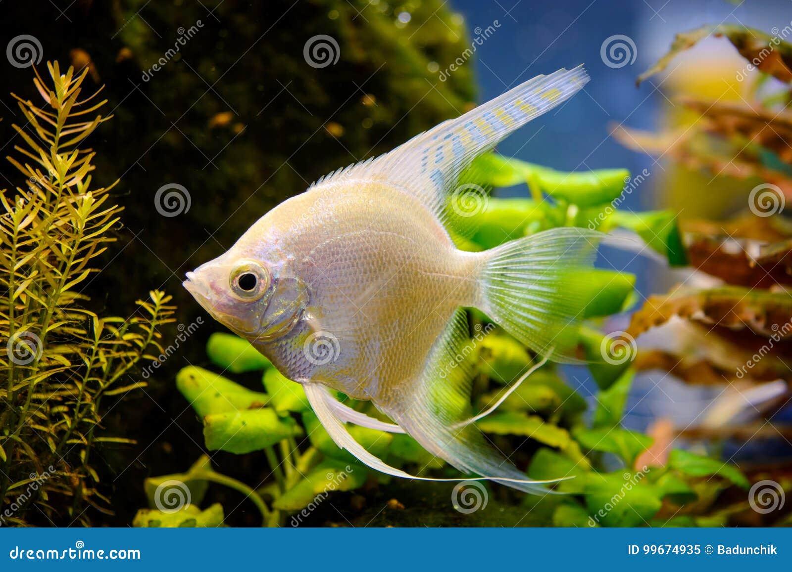 Natural Fish Tank At Home