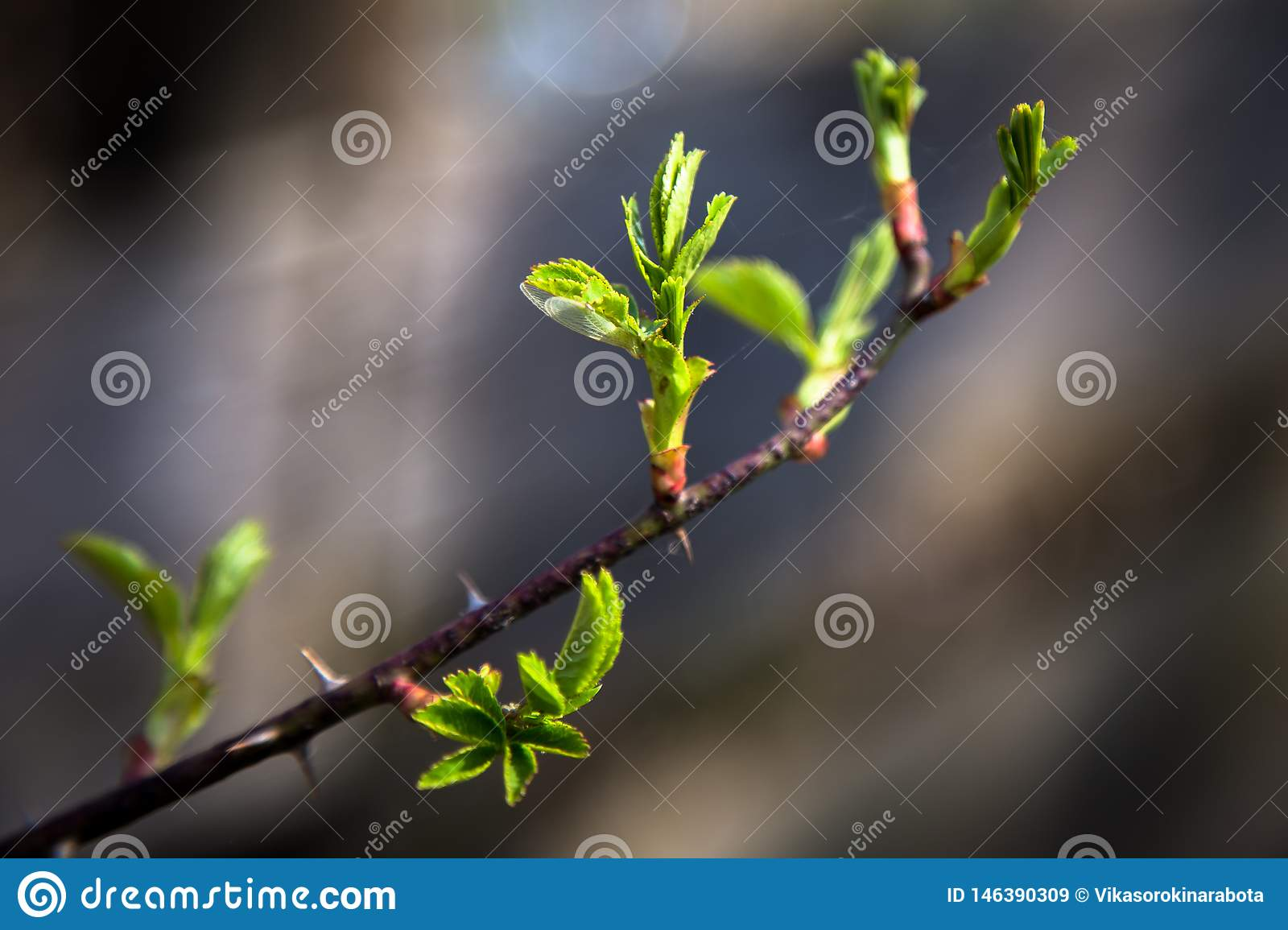 On the photo is a branch of a bush and a tree with a blurred background