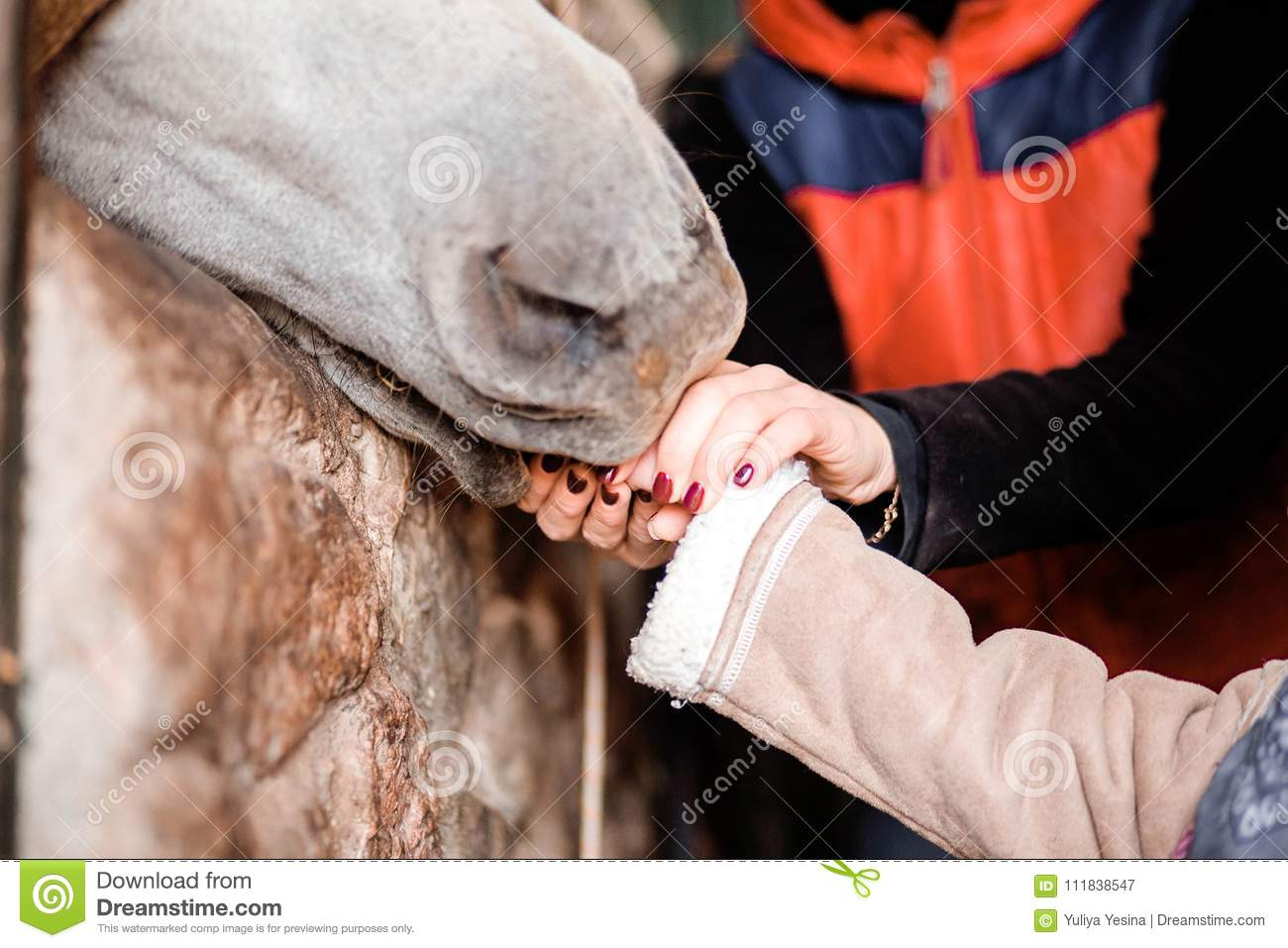 Children feed the horse from the hands on the farm