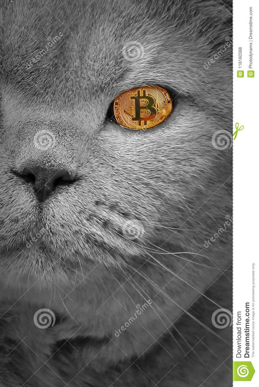 Cryptocurrency pictures of cats odds in sports betting meaning