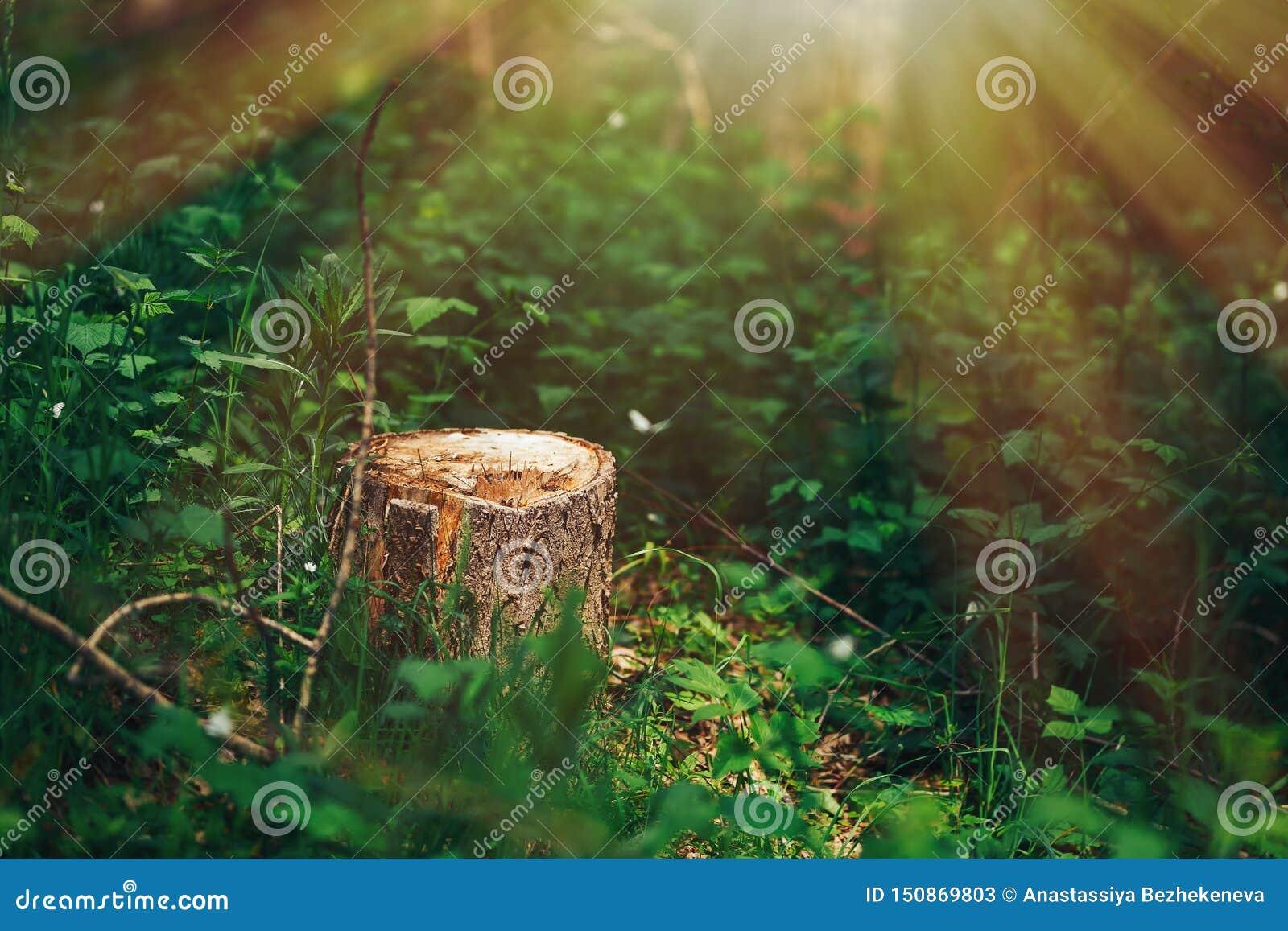 Photo d un tronçon pittoresque à la lumière du soleil dans la forêt verte, printemps Belle nature pendant le matin dans le brouil