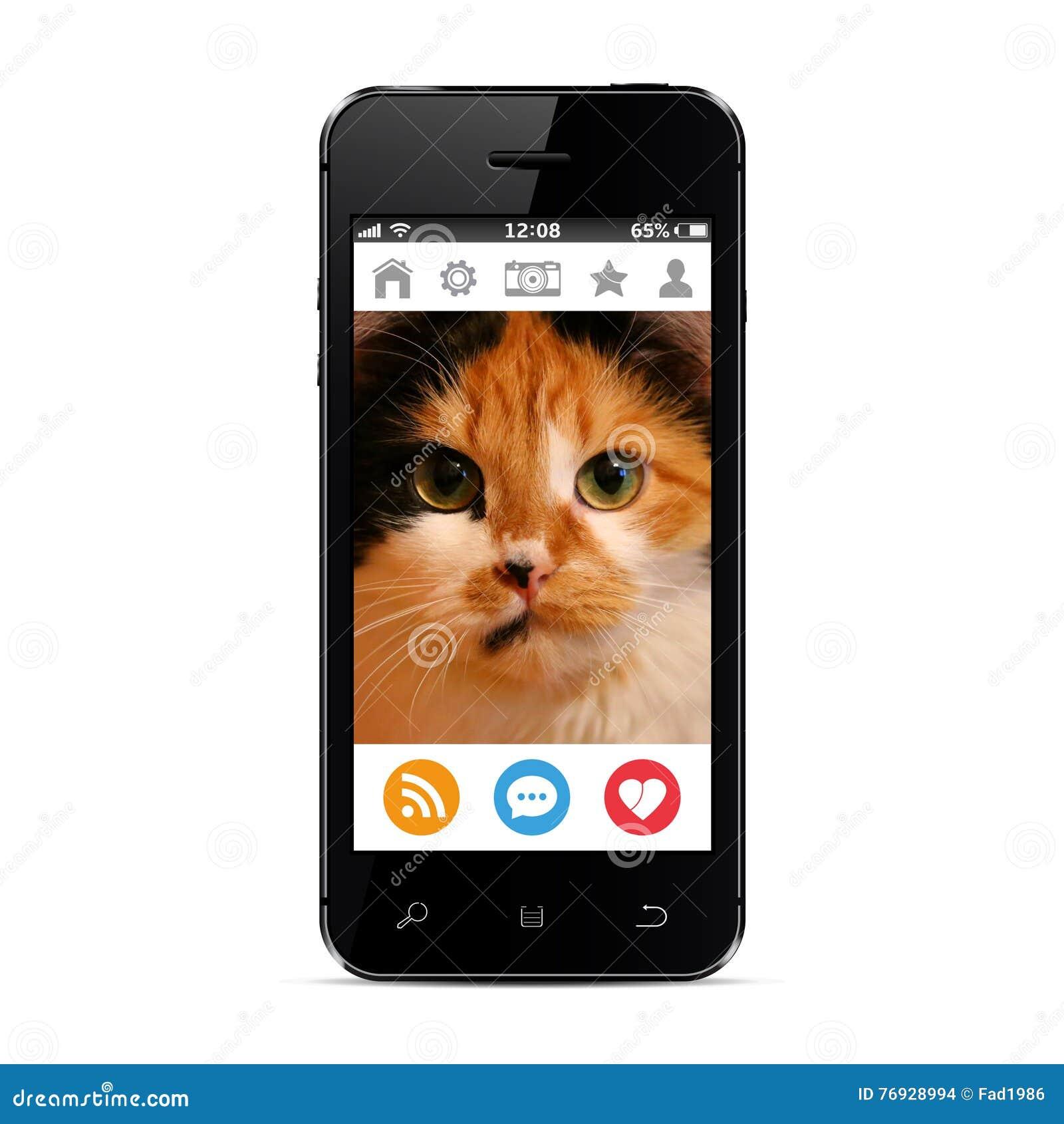 Photo de chat sur l écran intelligent de téléphone présenté dans un réseau social