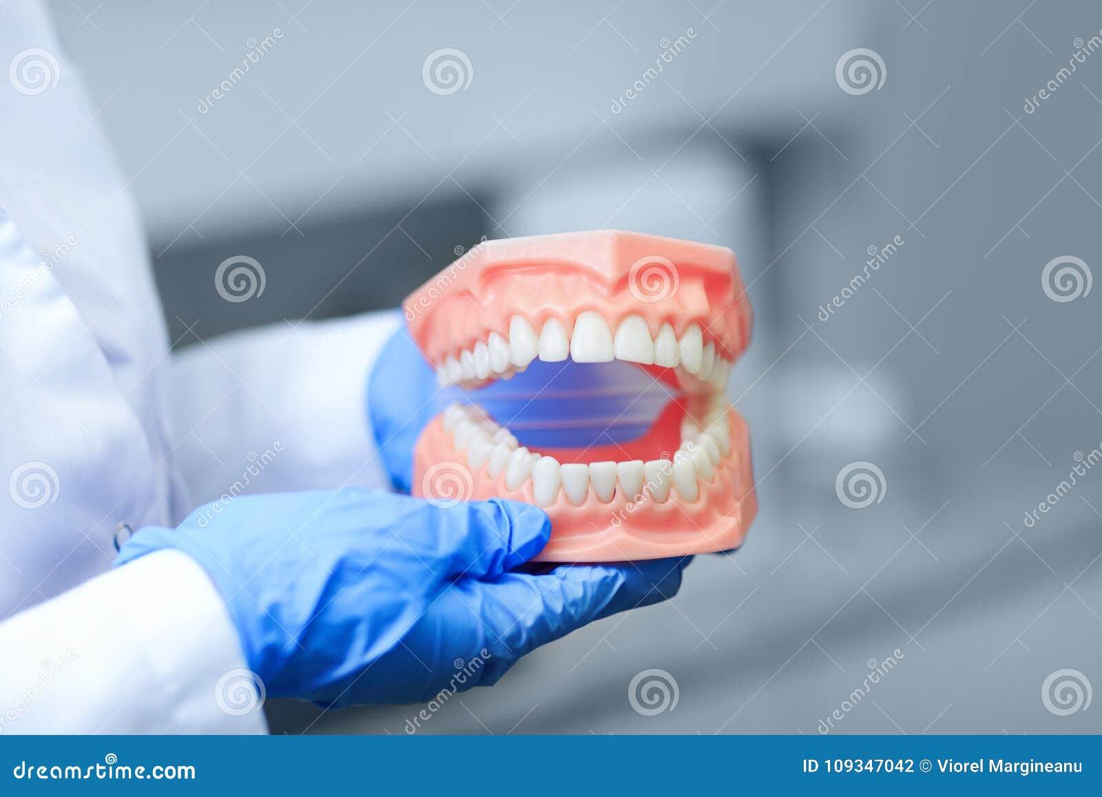 Photo de dentier avec le meilleur foyer sur des dents Dentiste se tenant sur