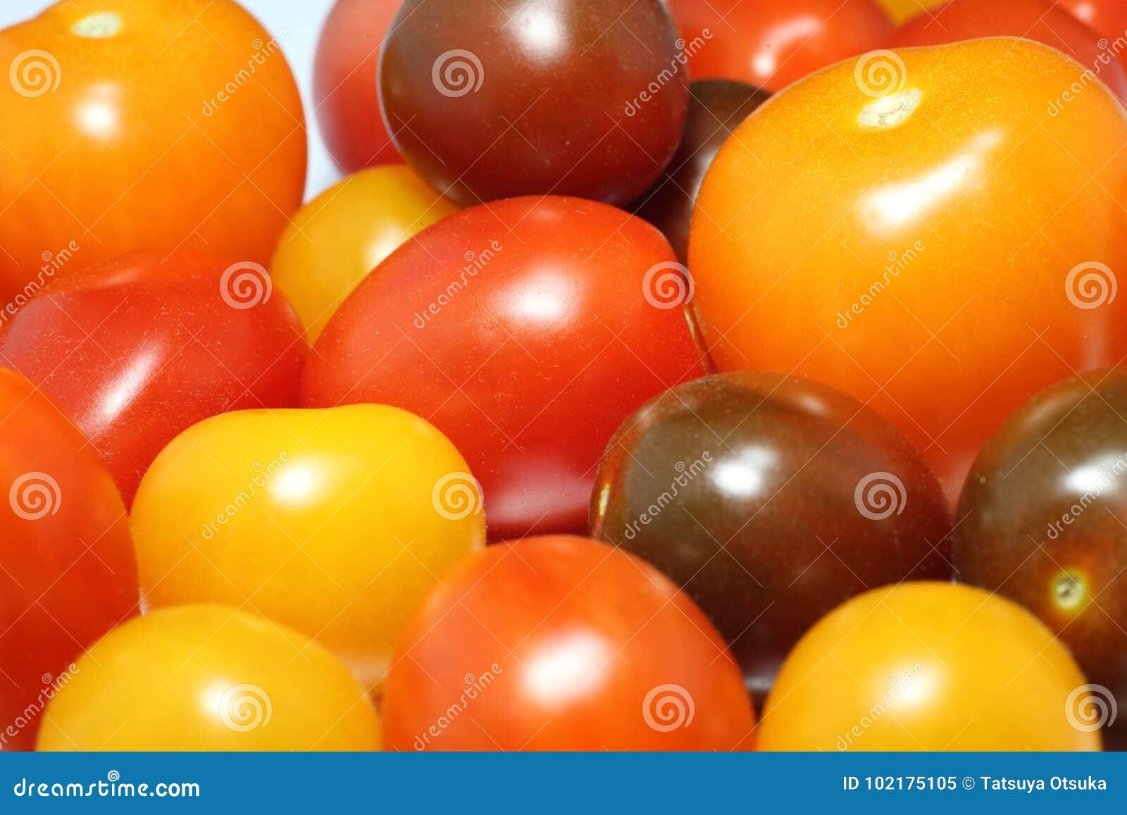 Photo de plan rapproché de tomate de raisin
