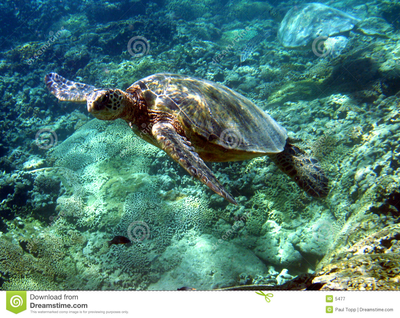 Photo de tortue de mer verte