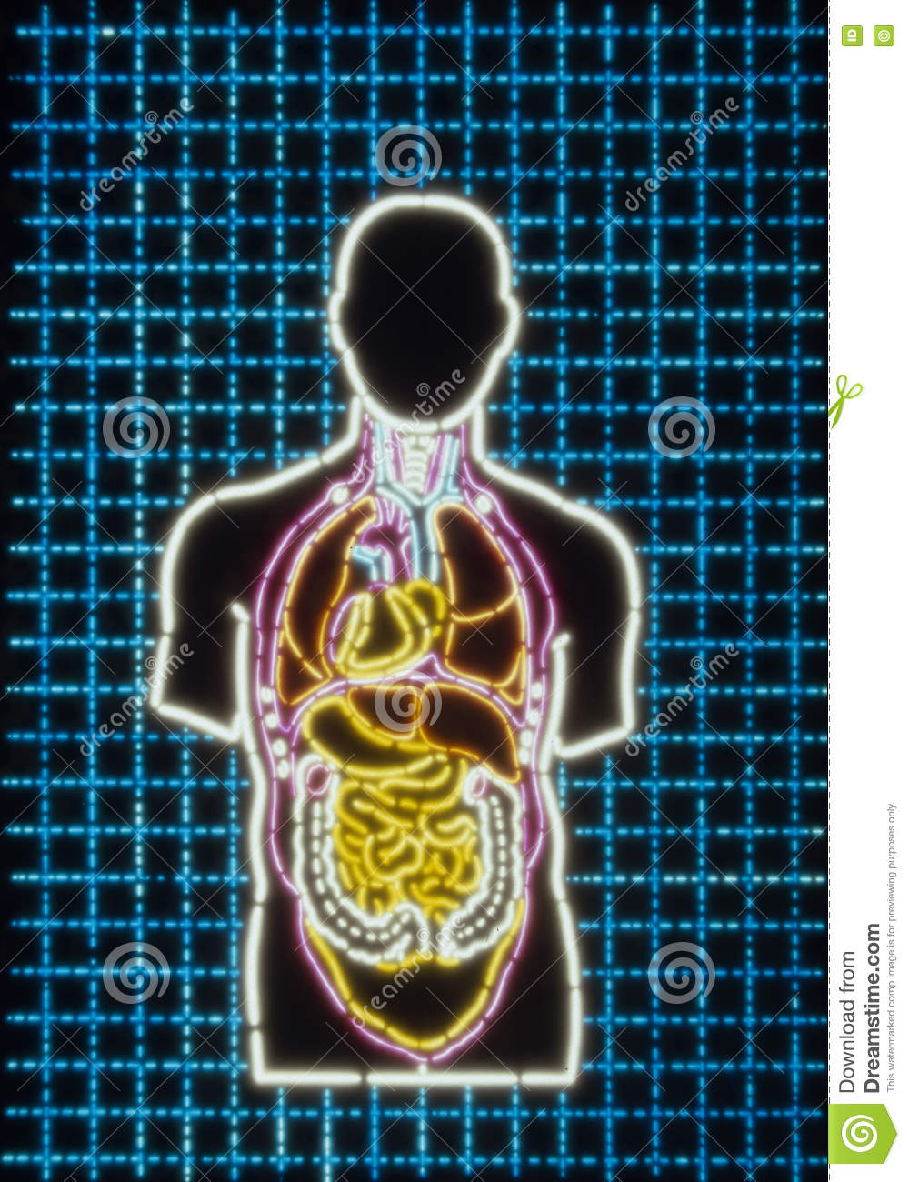 Photo-illustration of a Human Body