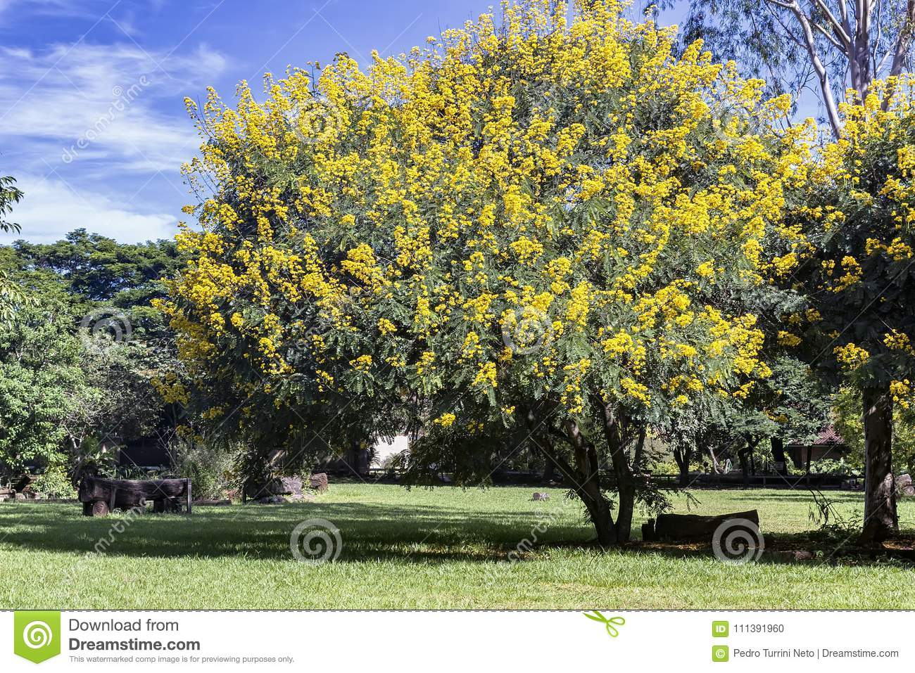 Leafy Trees With Yellow Flowers In The Field With Blue Sky With