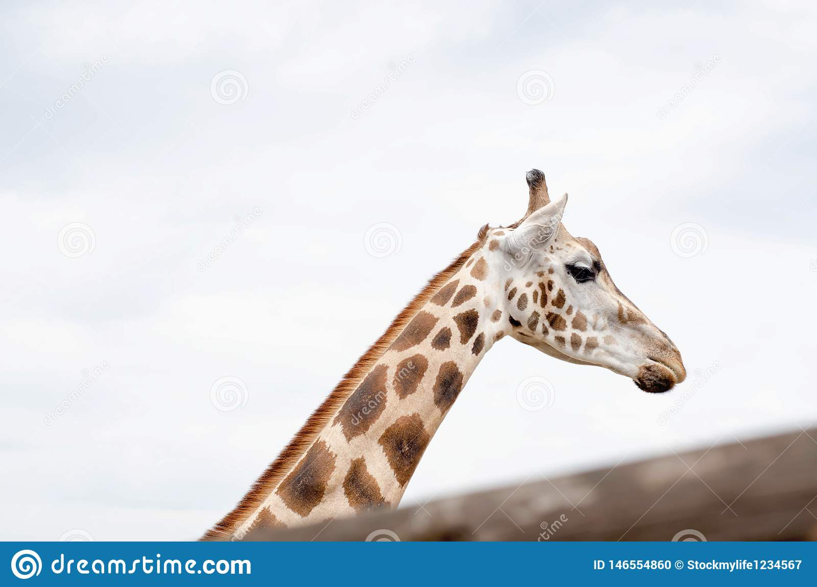 Photo Of A Live Giraffe Close-up Against The Sky Stock Photo