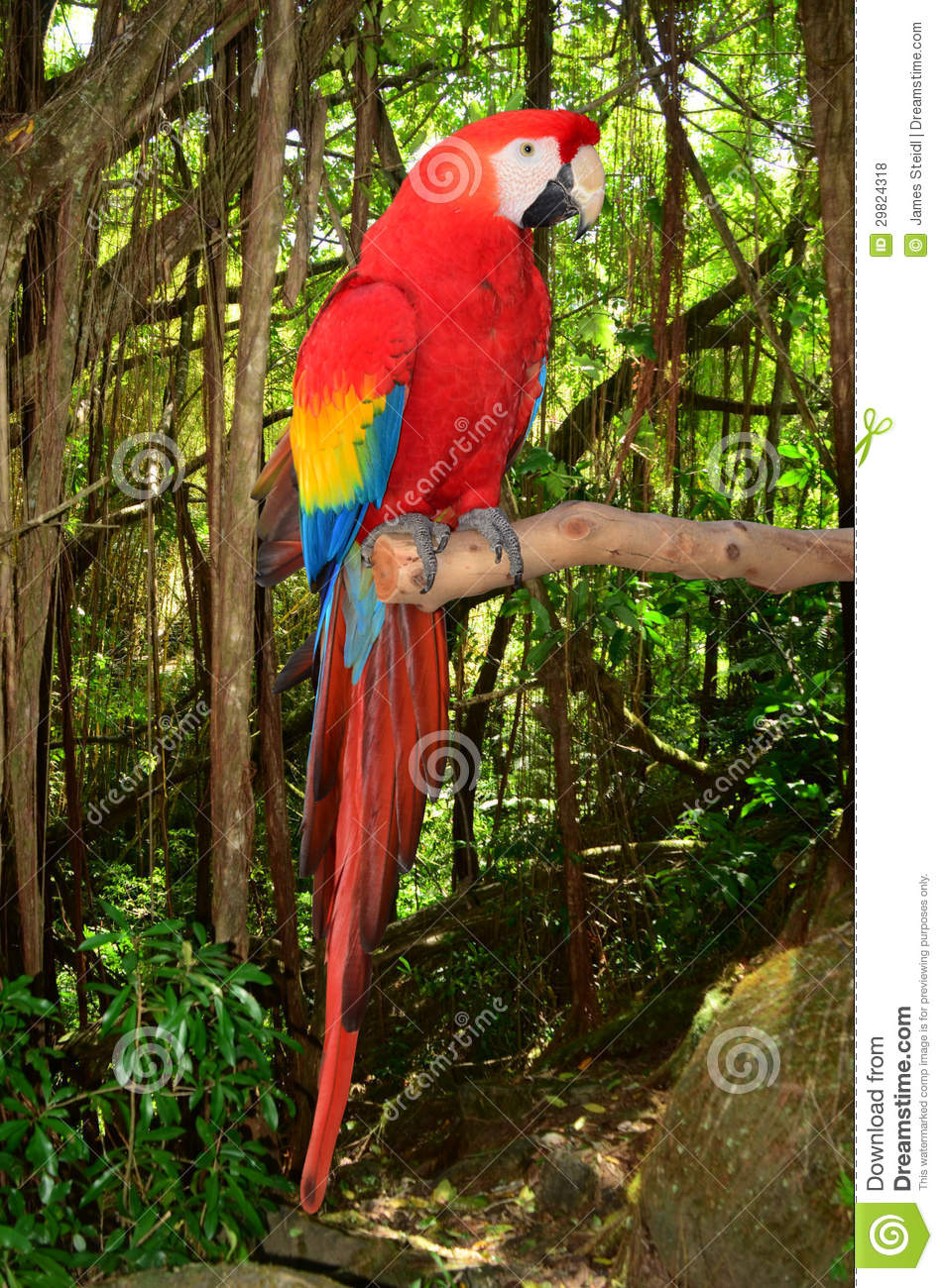 photo of a macaw parrot perched in a branch in the tropical jungle.