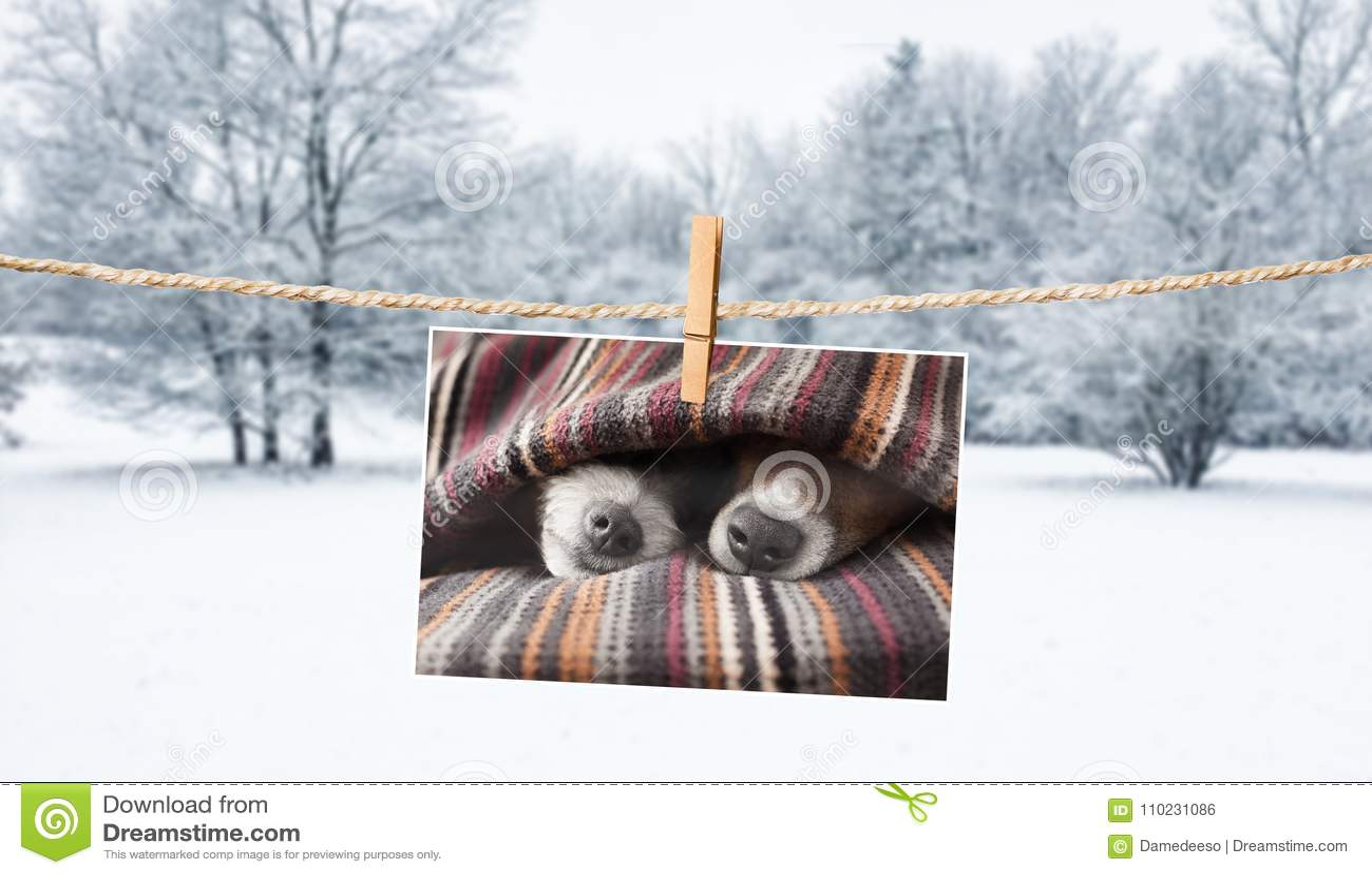 Photo mignonne des chiens sur la ficelle en hiver
