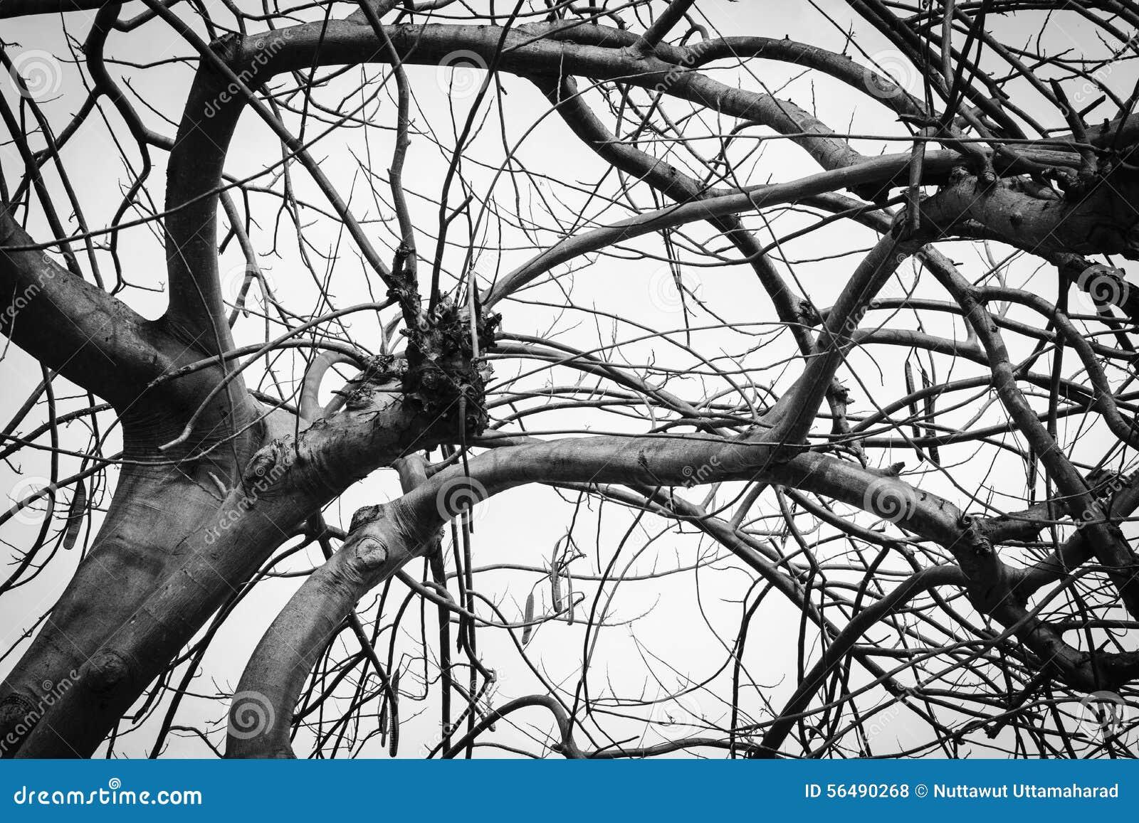 Photo noire et blanche d arbre mort d hiver