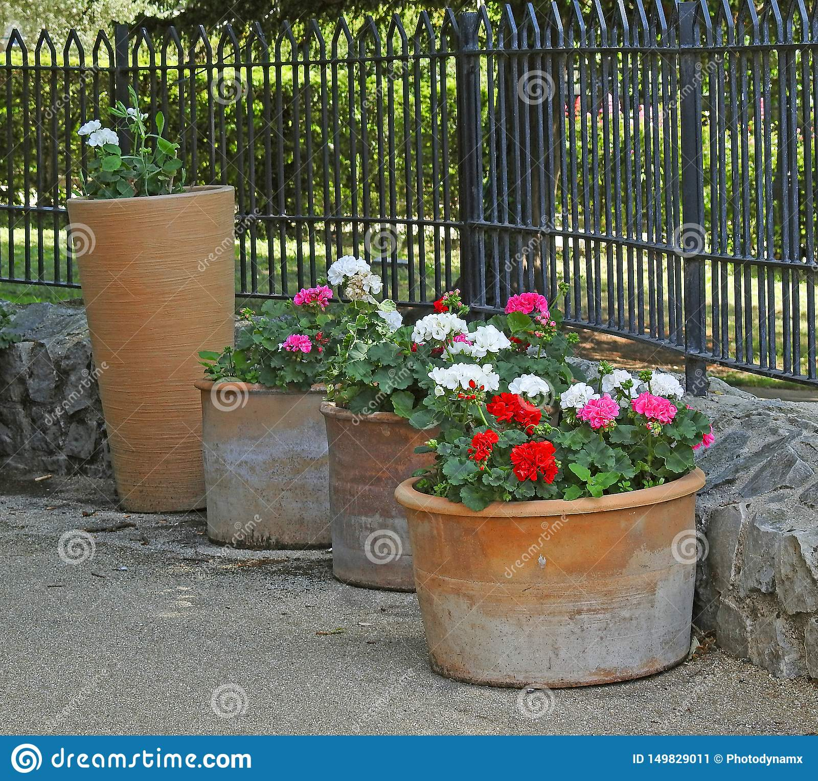 Potted Plants Flowers Tall Small Garden Path Summer Stock Image