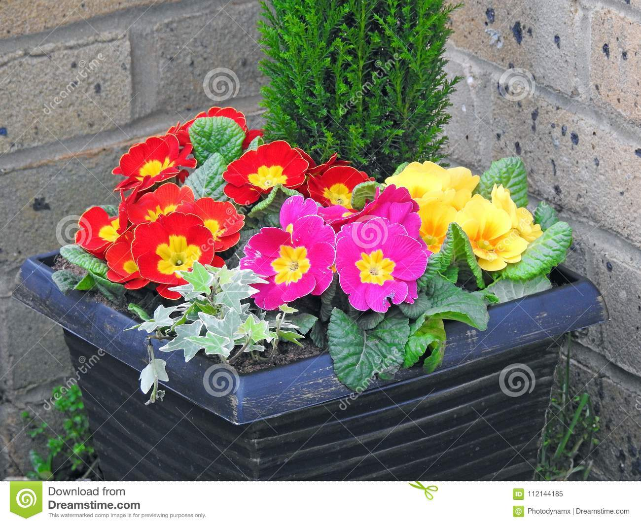 Potted Flowers In Small Garden Stock Image Image Of Plants Plant