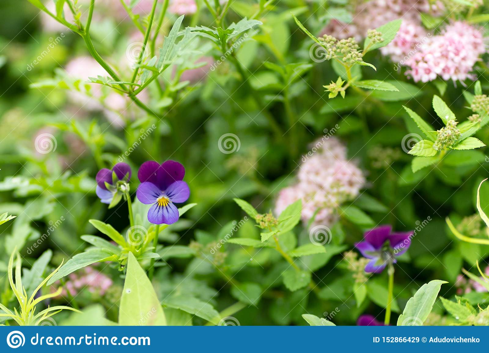 Photo of purple flowers against leafs background