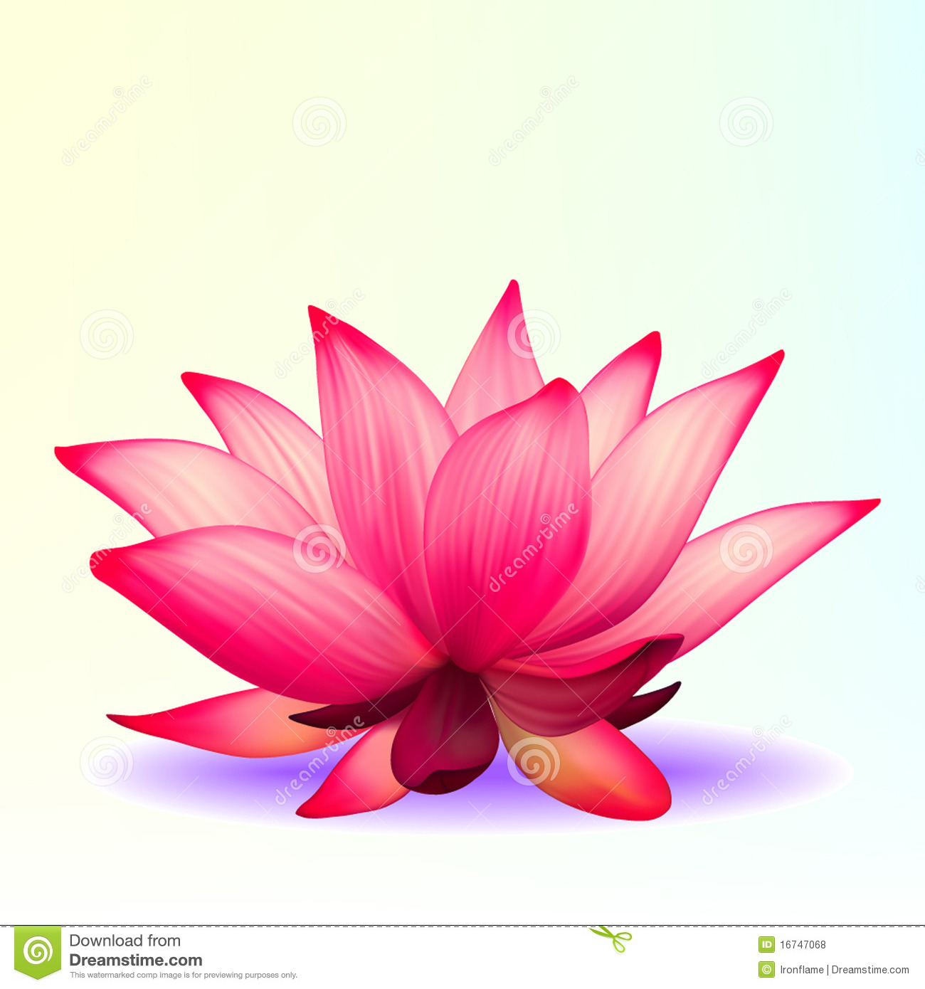Photo Realistic Lotus Flower Stock Vector Illustration Of Head