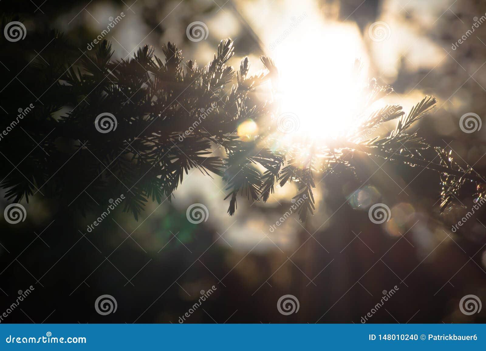 Sunlight shining through branches