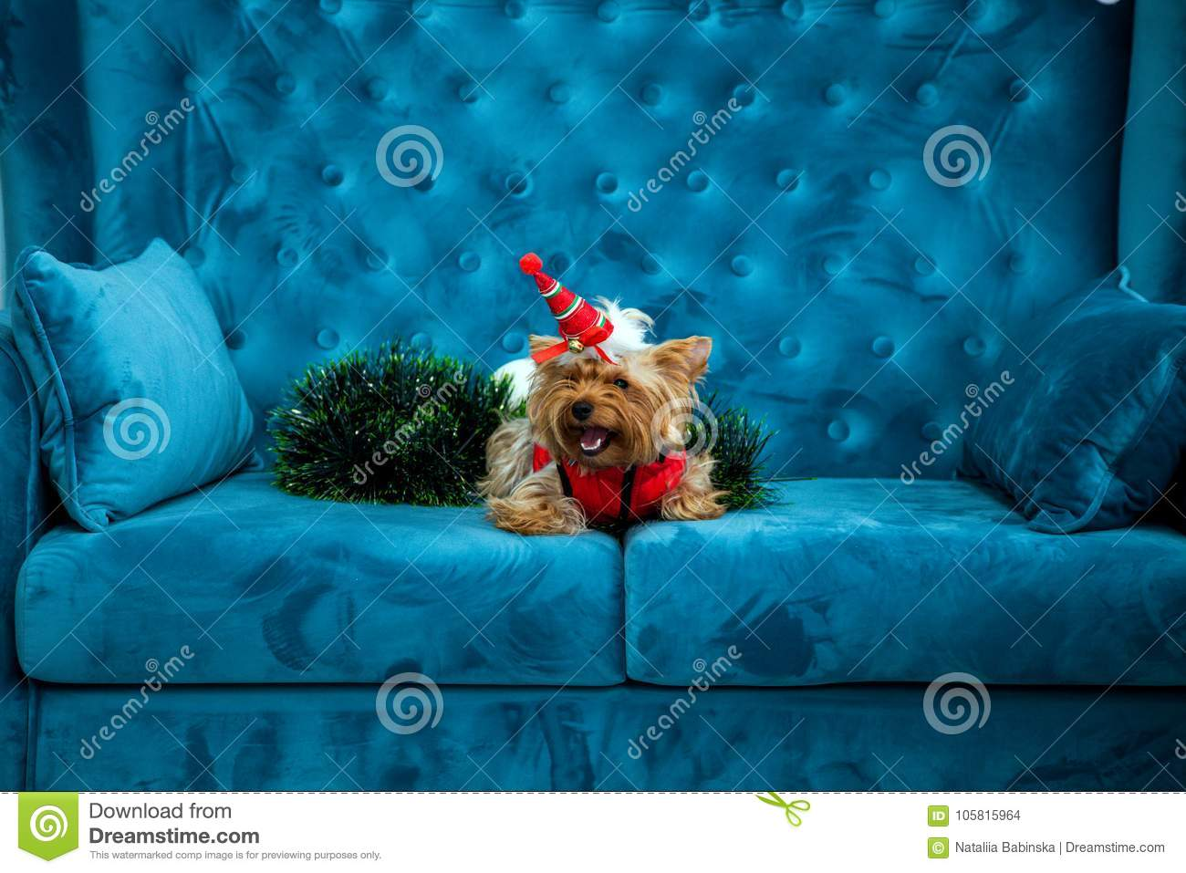 Awe Inspiring Photo Session Couch Tiffany Blue Turquoise Color Dog Pet New Cjindustries Chair Design For Home Cjindustriesco