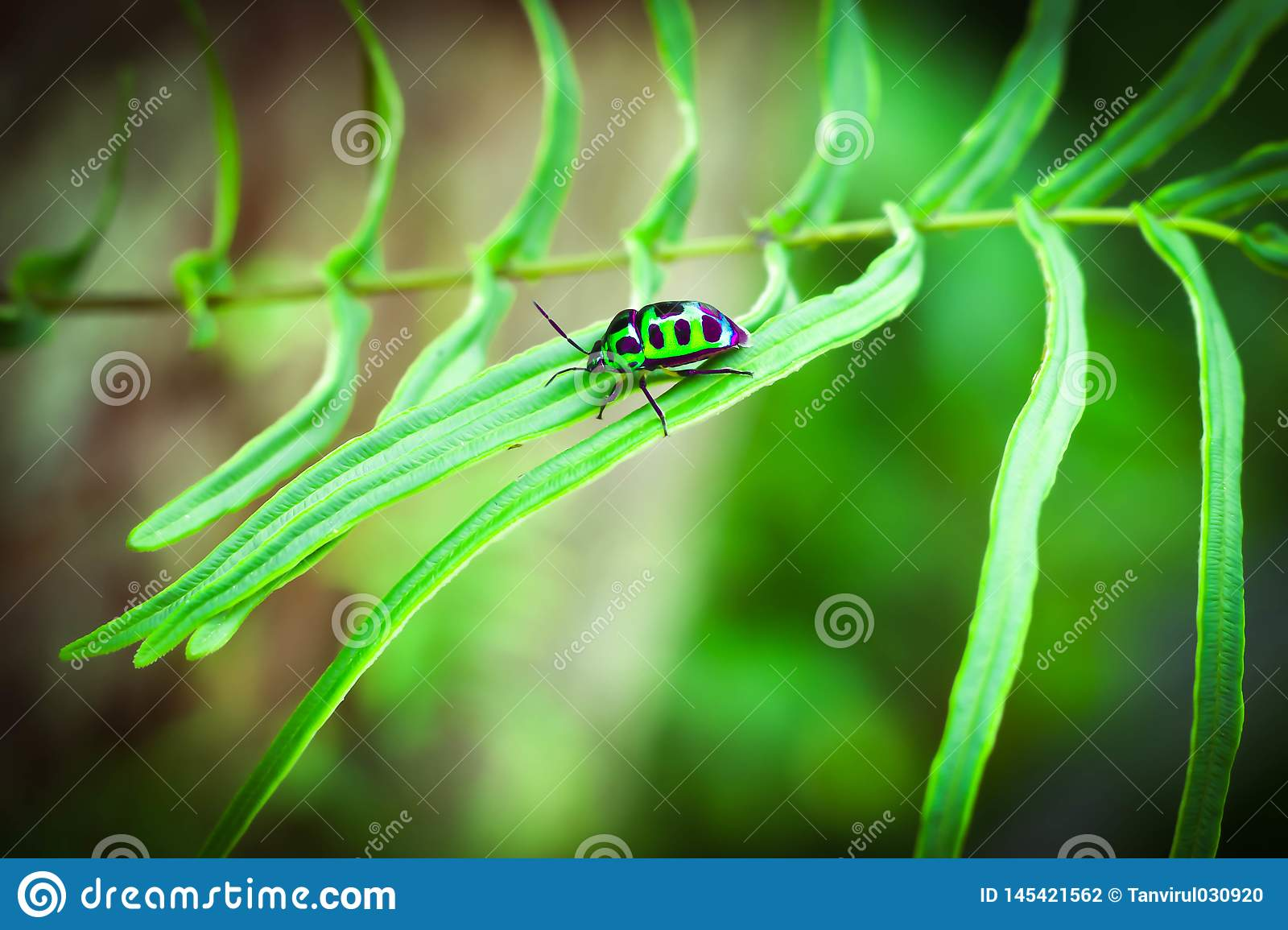 Small green insect of a tree