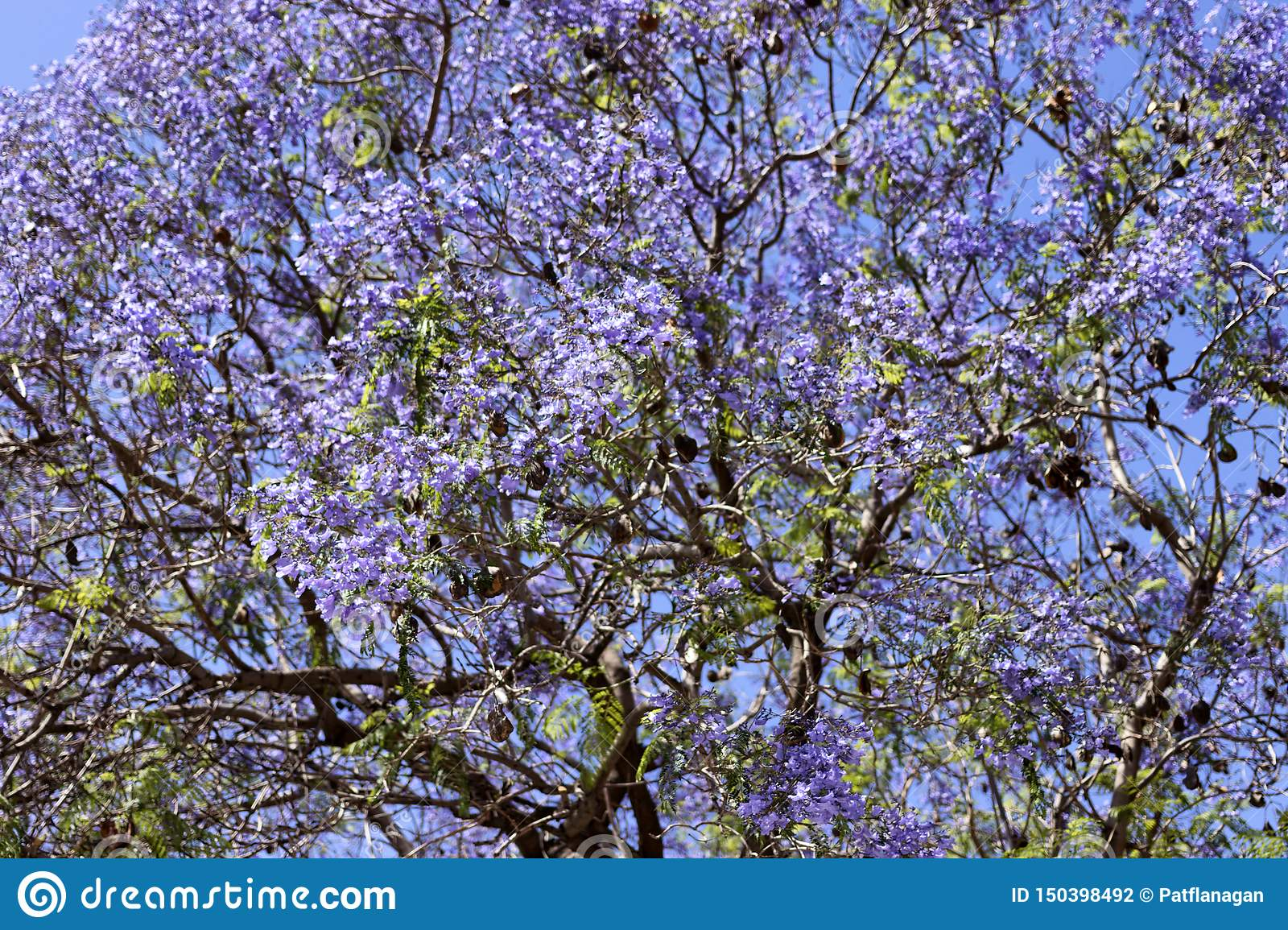Photo of a tree with purple flowers