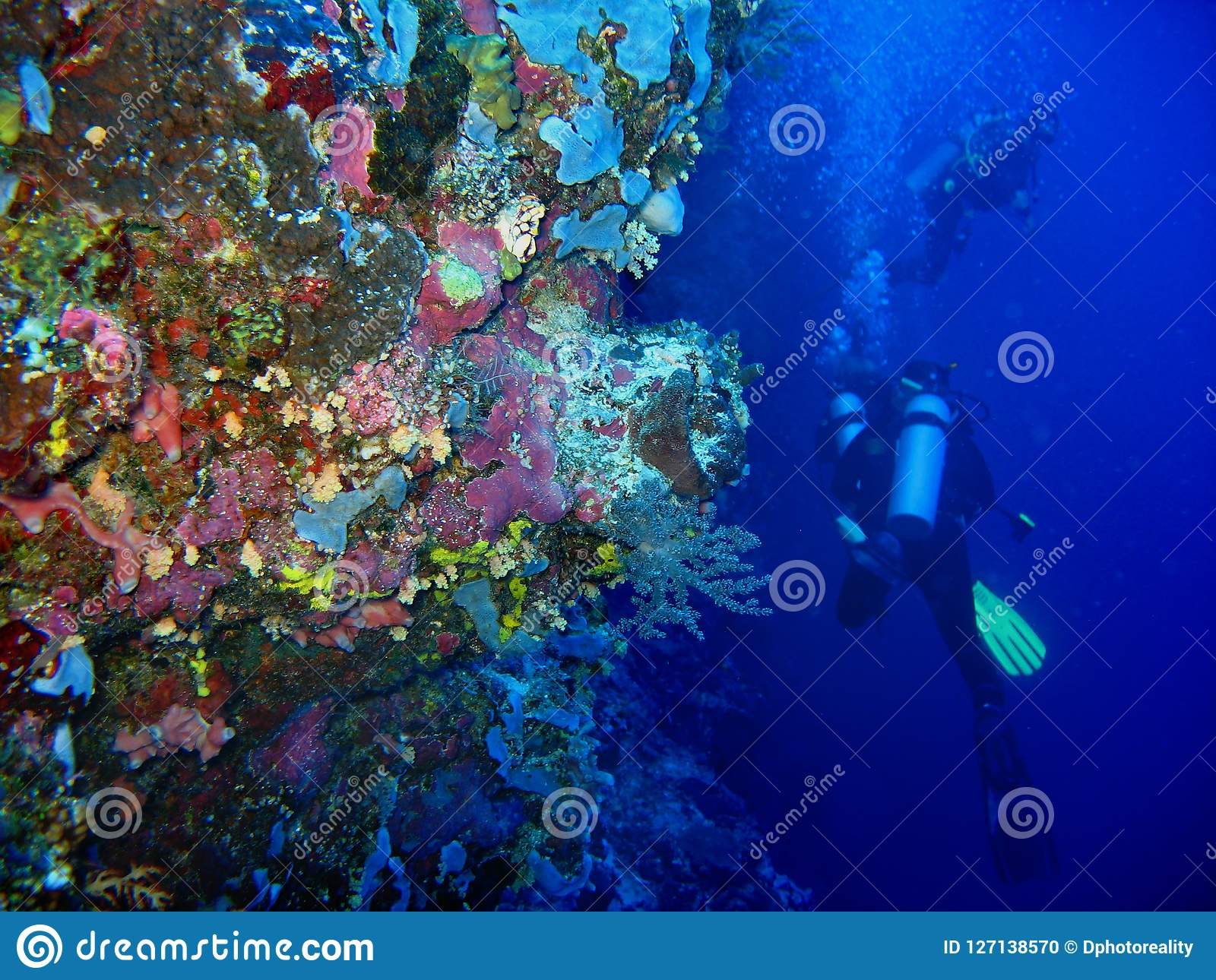 The photo of underwater wild coral on the foreground and two scuba divers are on the blue clean water background.