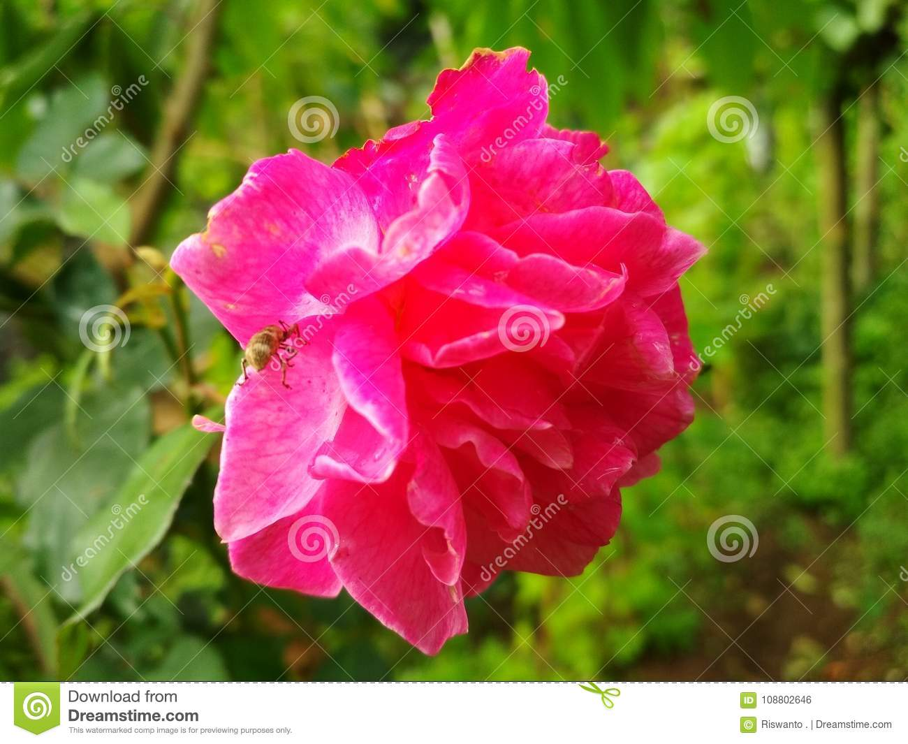 Red Roses Flowers Image Natural Stock Photo Image Of Roses