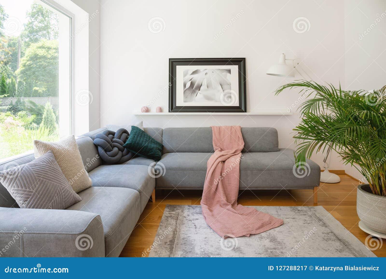 Photo vue au-dessus d un sofa avec la couverture rose et coussins dans un intérieur blanc de salon avec une grande, verte usine d