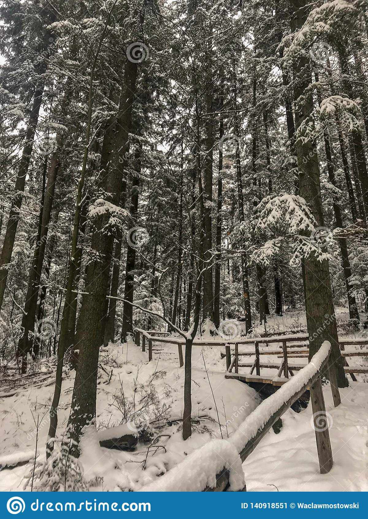 Walking path covered in snow inside forest with snow covered pine trees