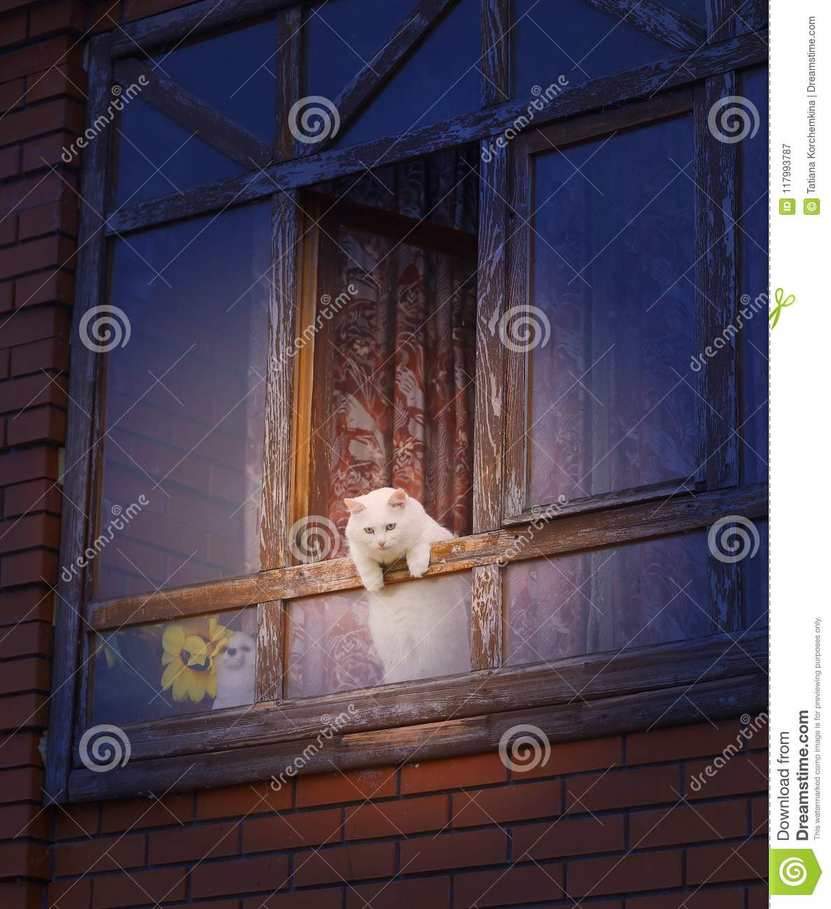 Photo of a white cat in the window