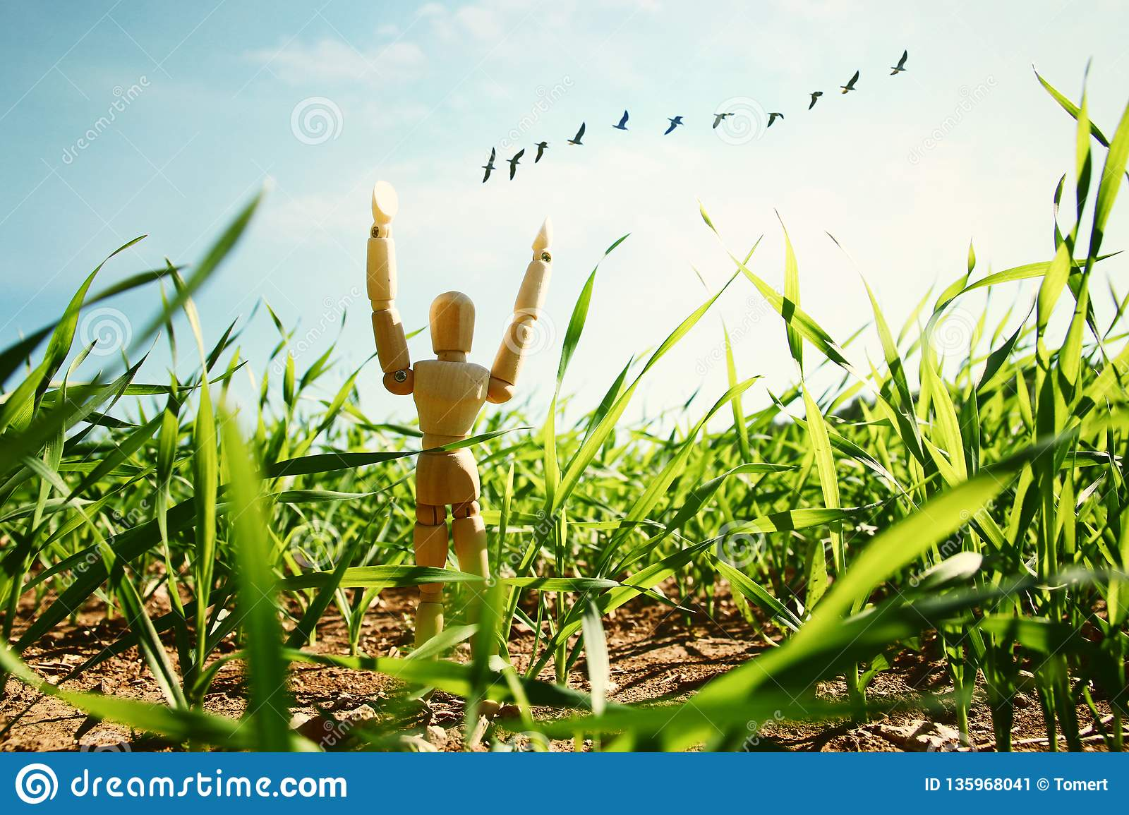 photo of wooden dummy standing in field looking forward at flying birds. think big and dream concept.