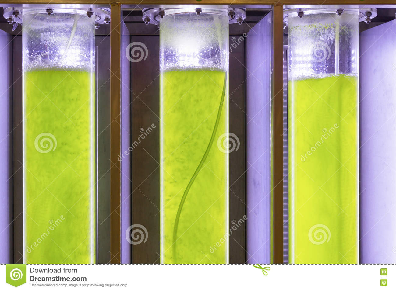 algae biofuel essay Essay on plausibility of algae biofuel comparable to current liquid fuels algae-based biofuels are a leading contender in the race for viable alternatives to traditional petroleum fuels.