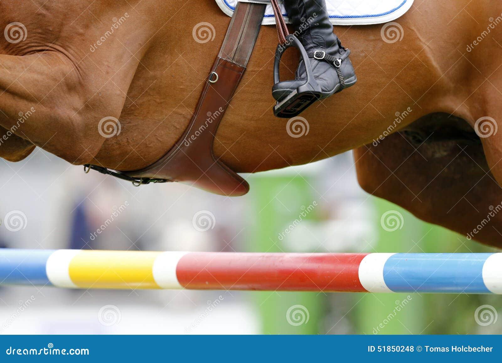 Photograp équin de détail (gonflez-vous le périmètre de selle, la botte du cavalier et une barrière)