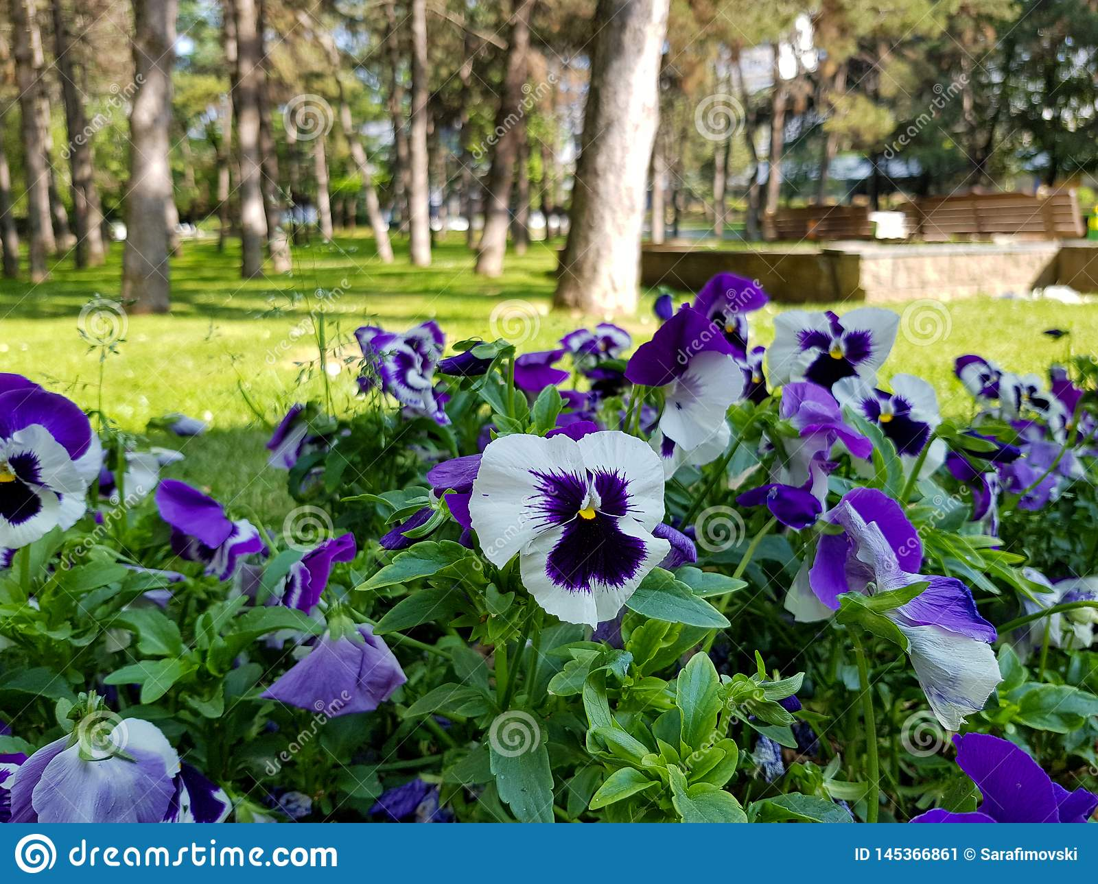 A photograph of beautiful flowers in city park.