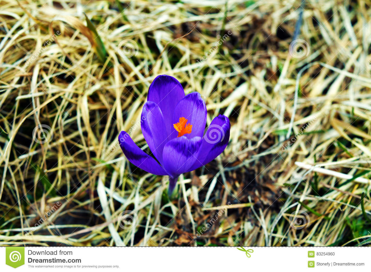 A Photograph Of An Isolated Purple Flower In Between Weeds Stock