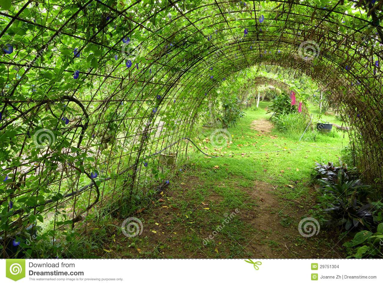 Planting frame pea plant organic farm stock photo for Dream plants for the natural garden