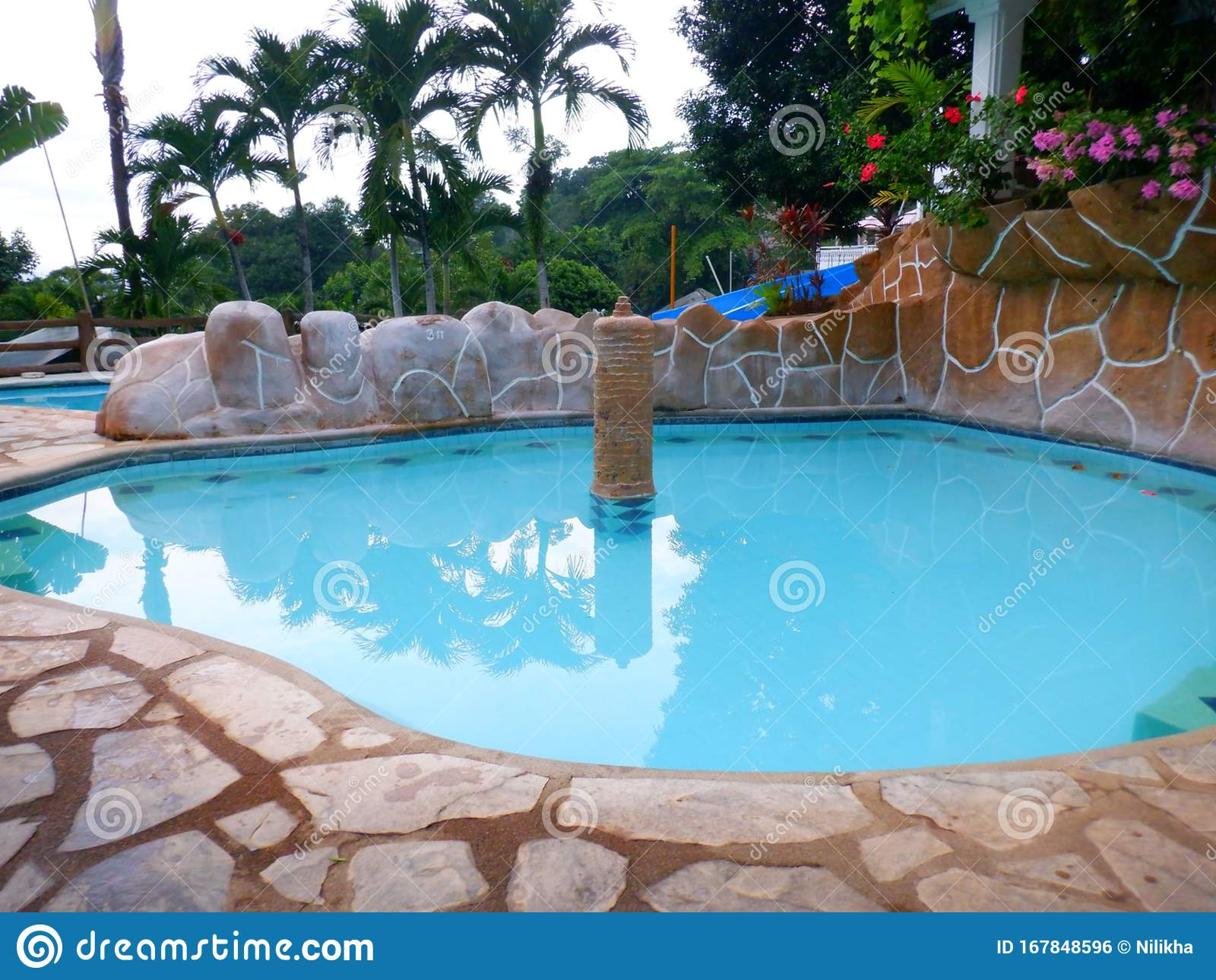 Swimming Pool With Plants And Trees Stock Photo Image Of