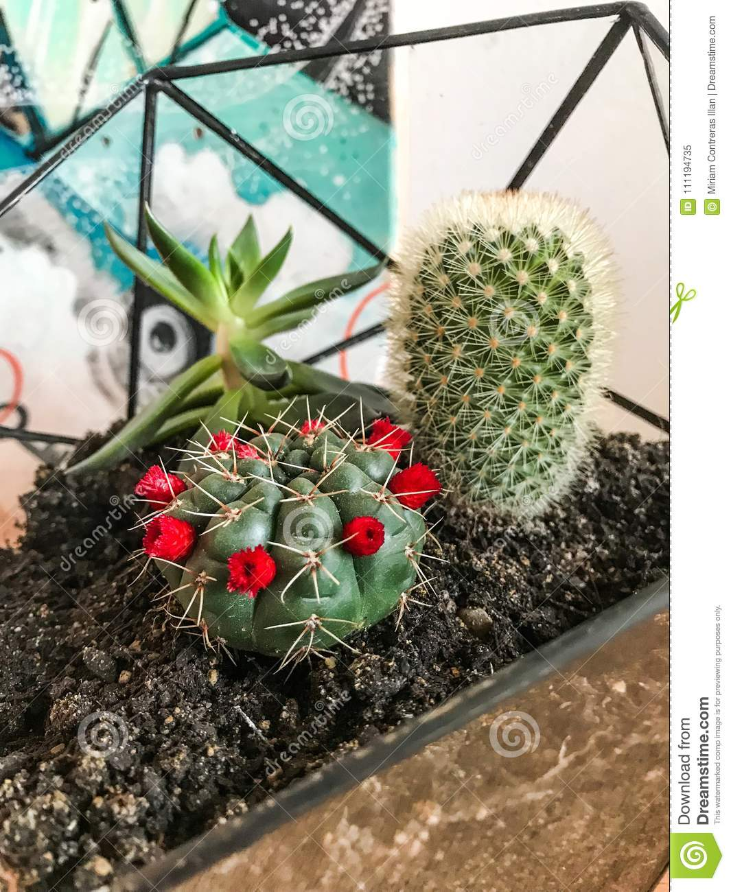 Photograph Of Terrarium With Cactus And Succulents Stock Image Image Of Cactus Glass 111194735