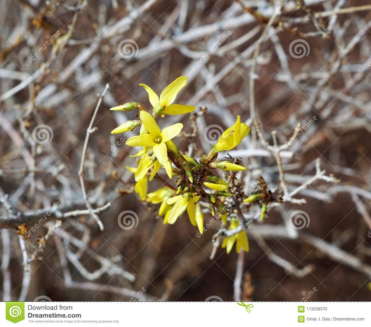 A tiny yellow clump of flowers on a bush stock photo image of download a tiny yellow clump of flowers on a bush stock photo image of flowers mightylinksfo