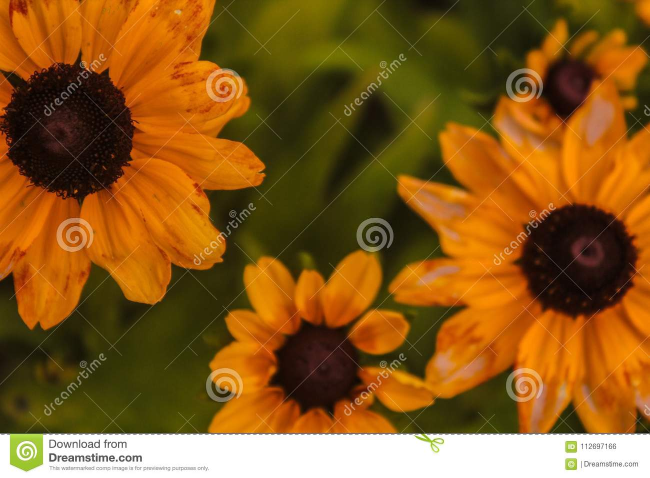 sunflowers wallpaper stock photo. image of cavalo, gramado - 112697166