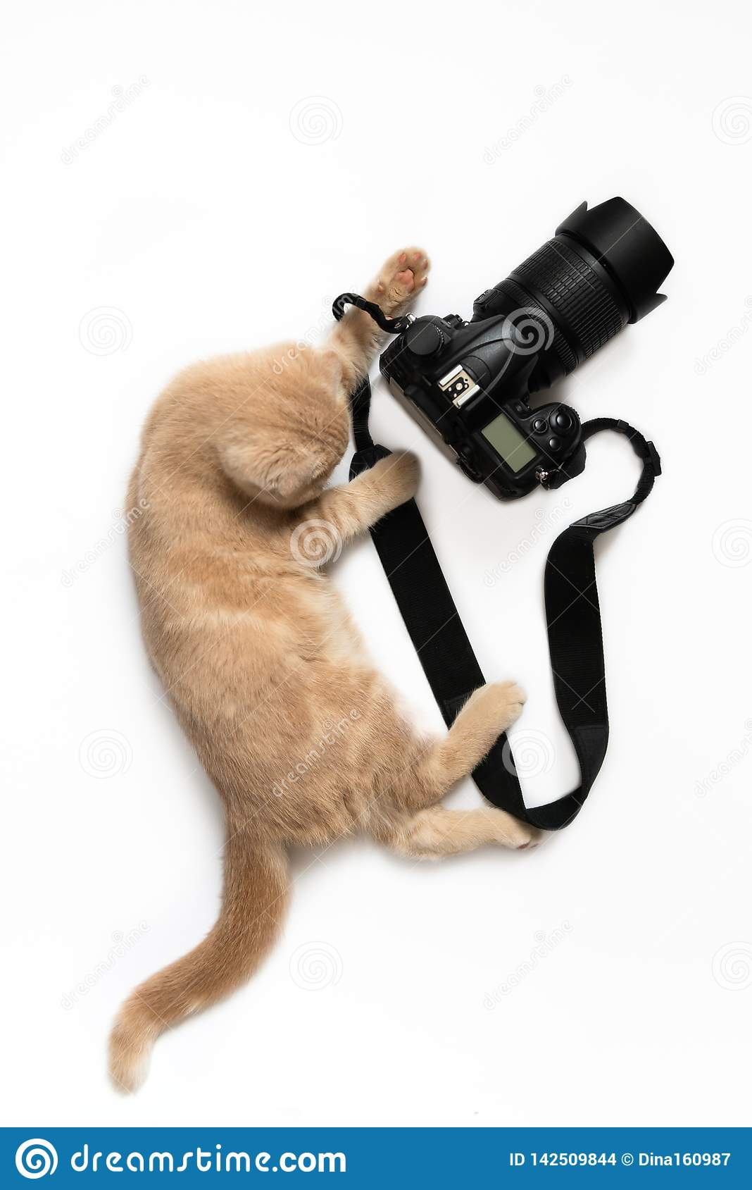 Photographer concept card. Cute cat with camera taking a photo isolated on white background. World photography day