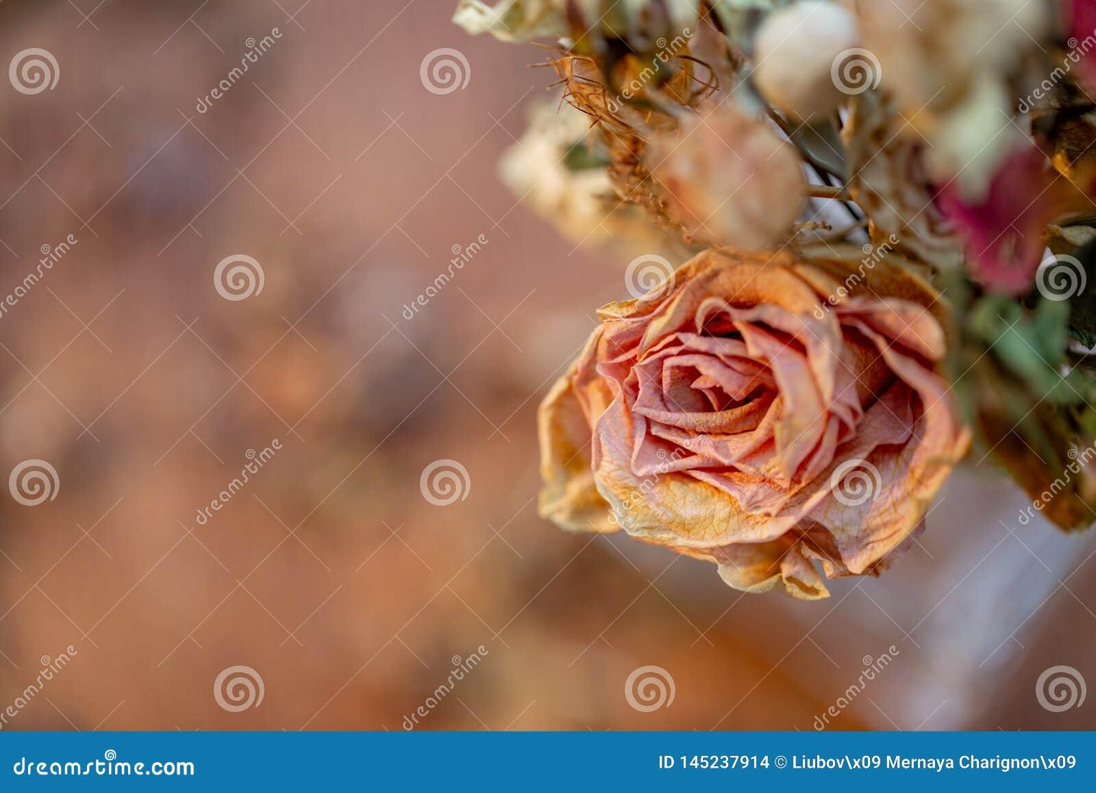 Photographie d art Roses d?fra?chies r