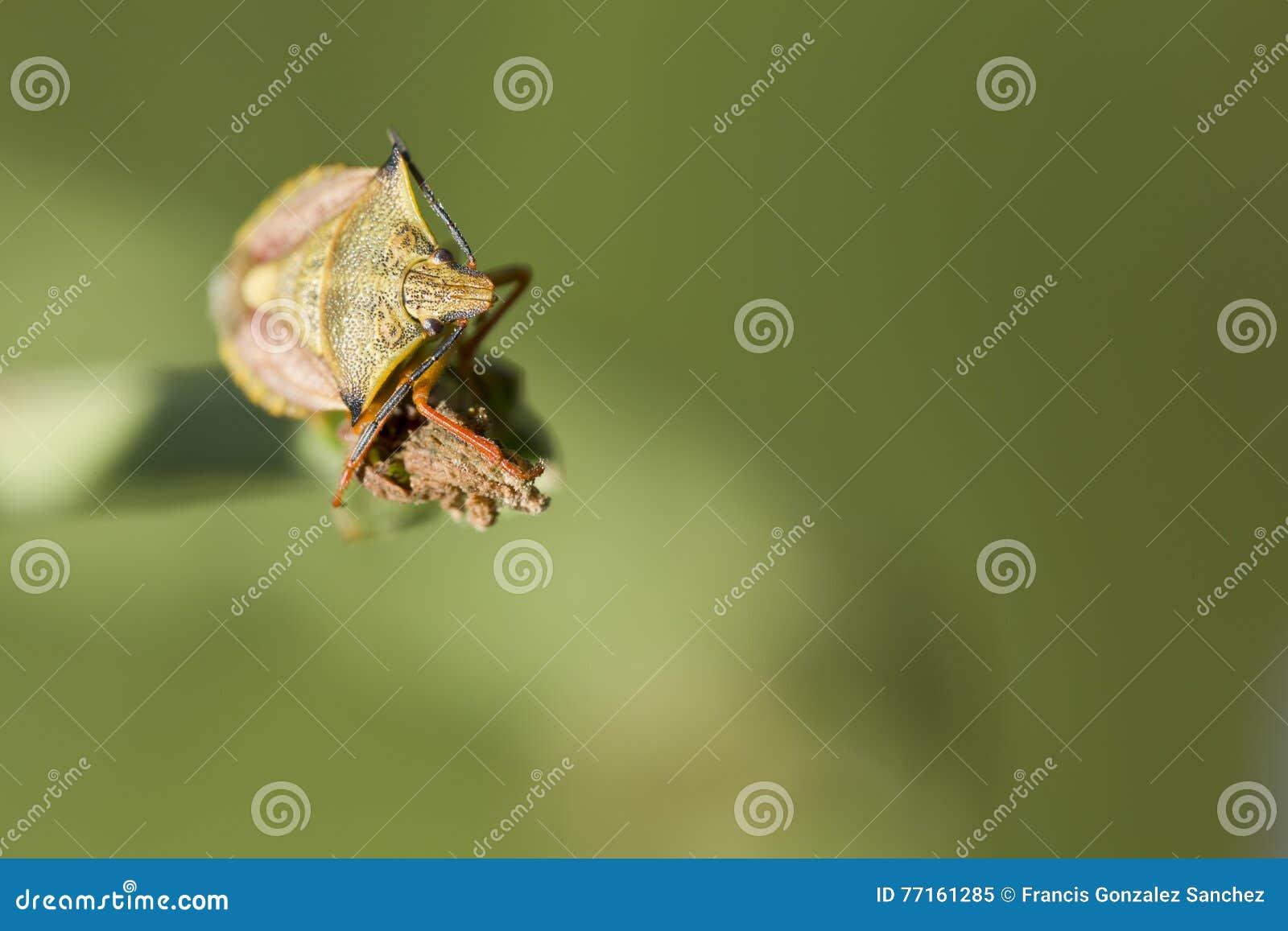 Photographie de macro d insecte