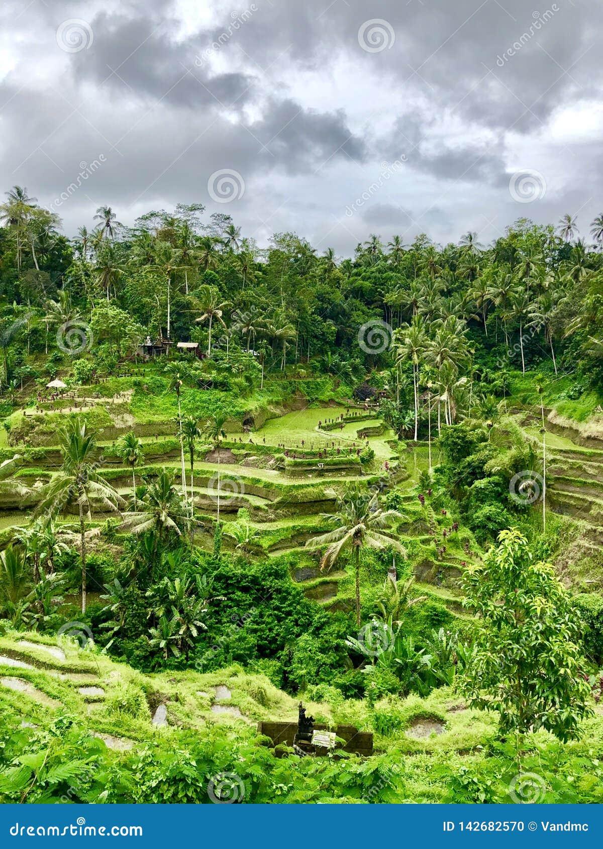 Unusually beautiful rice terraces photo