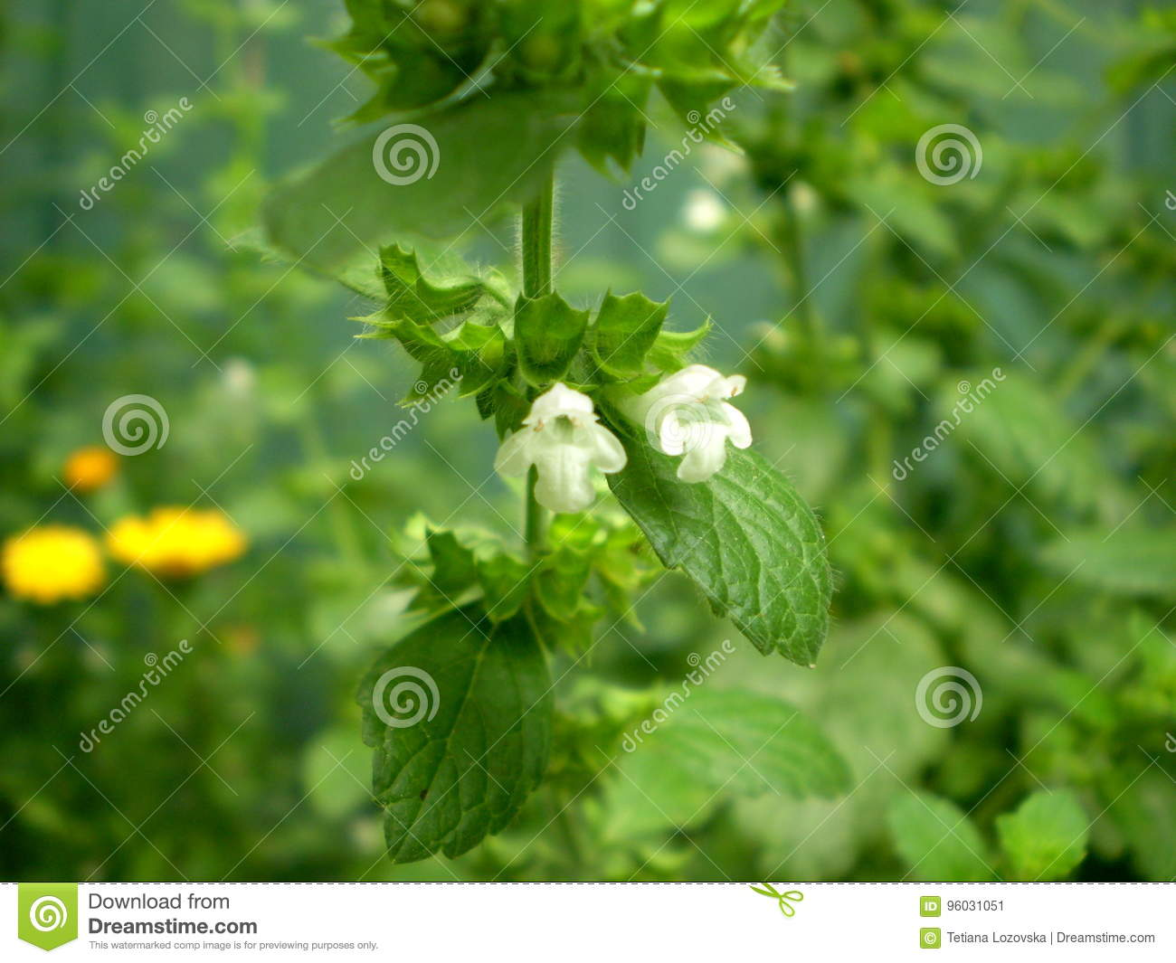 Photography Of White Flowers On Blurred Green Background Stock Image