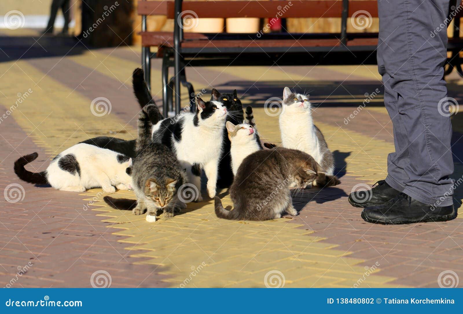 Photos of funny many cats eat