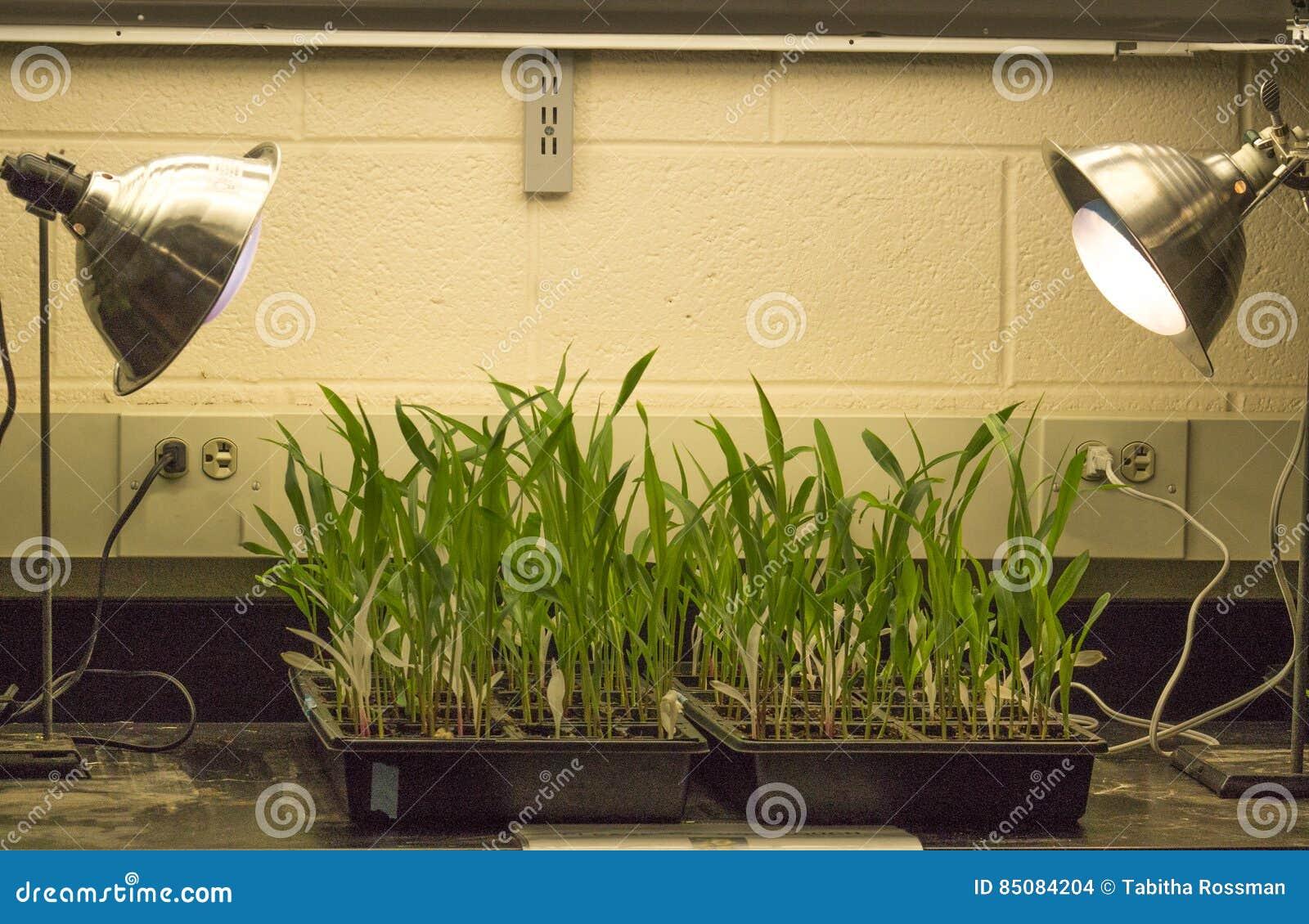 Photosynthèse dans l action